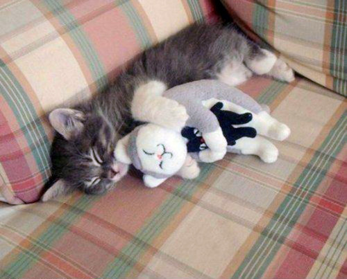 D'aawww! It's like a sleeping-kitten-inception. We must go smaller!