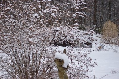 A Winter's Pond … It's the first significant snowfall of the season and what a beauty it was! It turned a drab winter garden into a white fairyland …Amid the deer-prints in the snow, the brightly colored plumage of the cardinals and bluejays truly brightened a gray day. Mr. and Mrs. downy woodpecker dined on both sides of my suet feeder, while a tiny wren combed the snow at the bottom for tidbits of suet. My butterfly bushes were filled with juncos, their dark little bodies almost looking like buds, as they waited for their turn at the feeders that were covered with black-capped chickadees, tufted titmice and red-breasted nuthatches. My robin was back, frantically looking for a holly berry he might have missed. then it was off to my cotoneasters which still have plenty of berries … but I guess they are not as tasty as the holly berries. And, of course, after they filled up on corn, my crow family yelled and cawed for some table scraps. And, I obliged with some leftovers.
