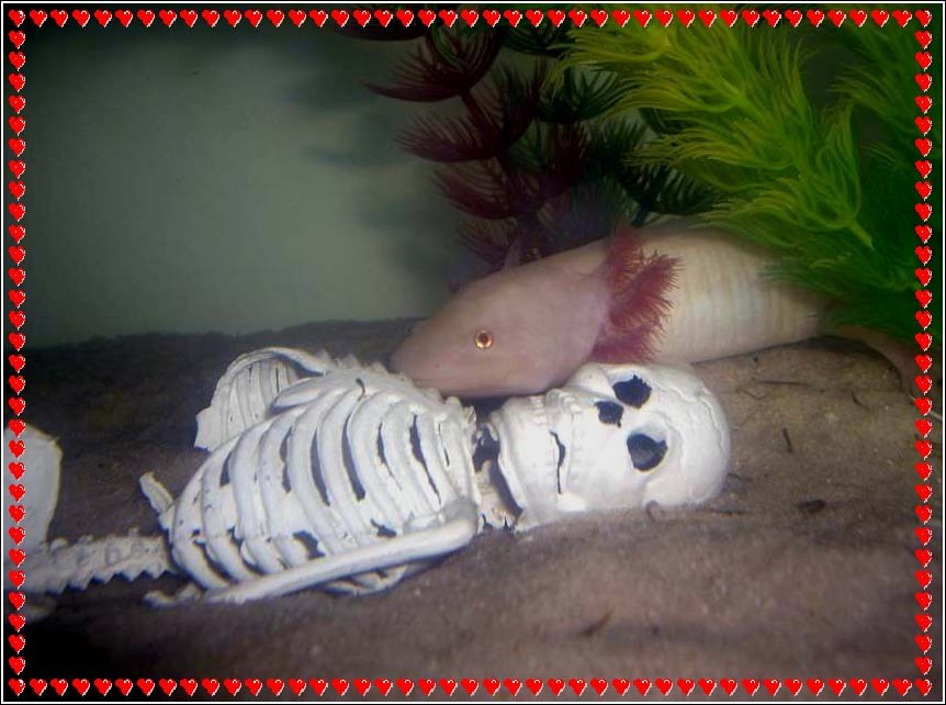 giant axolotl feeding on human remains