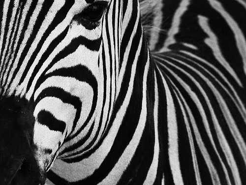 noneedforsecondopinions:  Stripes (by Jetuma)