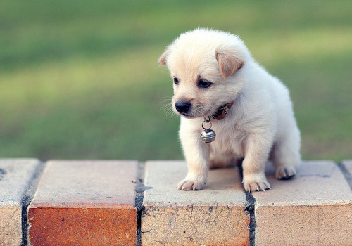 want a puppy so bad…