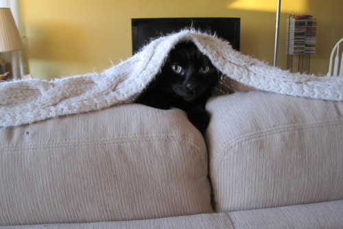 Get out of there cat. You cannot be Yoda hiding under that blanket that protects the couch from your fur. only Frank Oz can be Yoda. Besides you are not a Jedi master you are a cat. you don't even know how to use the force.