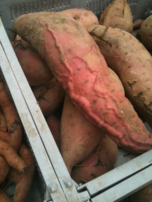 This vegetable.