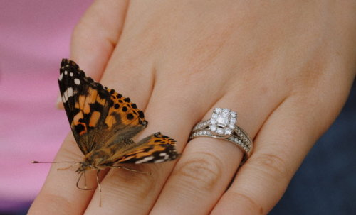 steph521:  Another lovely picture of my ring  Beautiful ring. Beautiful photograph.