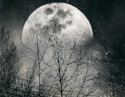 Moon Through Trees in NY 1959
