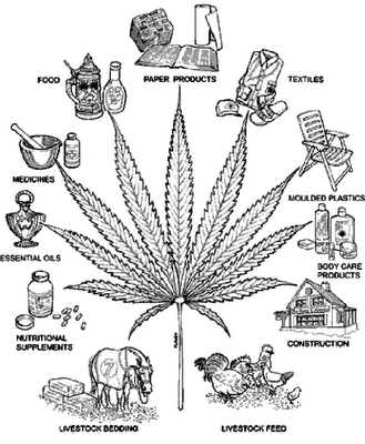 In honor of 420: The Many Uses of Hemp