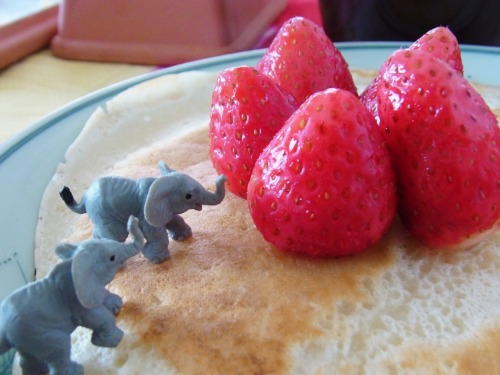 tokyokumako:  do you like pancakes?  yes yesss!!!! elephants too!!! gahhh!!