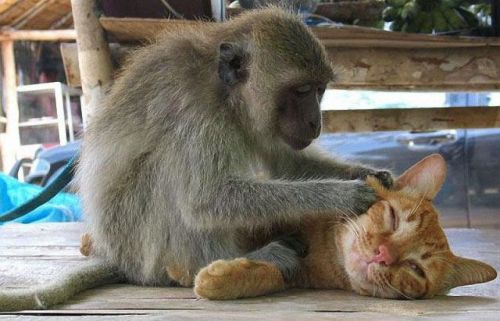 caturday:  Massage therapy