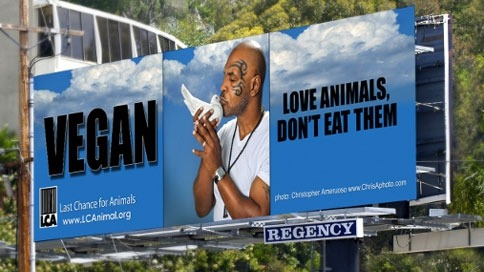 "Tyson's latest billboard. It's for Last Chance for Animals. He's making out with a dove. Like, I kinda want to rescue that dove. From LCA:  Tyson, who has been vegan for over a year and a half, said about being part of this PSA with Last Chance for Animals' ""I am truly honored and grateful to be a part of this cause. It's been a while since an organization has wanted me for anything and to be a part of something that benefits people and animals in such a positive way is a blessing."" On being asked what it is like being vegan, Tyson replied; ""I have been a vegan for almost two years now and the benefits have been tremendous. I have more stamina and it helps keep me in a positive state of mind. I didn't realize how weighed down I was when I ate meat. I never really felt 100 percent until I freed it from my diet. Now, I can't imagine going back to meat. I feel incredible.""  Aw I was sad when I read that comment about it being a long time since an organization has wanted to work with him. Then I remembered he's a rapist. That sobered me right up! But there are many people who adopt a vegan diet as an anti-violence stance so maybe it is part of a self-imposed rehabilitation. After all, there are all those great ""dogs behind bars"" programs that help inmates learn empathy and how to care for another being through caring for a dog. They've proven very successful. And people who abuse animals often have a history of violence against people too so maybe they are intrinsically related. Maybe veganism is the only way for society to become truly non-violent. Maybe? A wise man (aren't they all?) once said, ""As long as there are slaughterhouses, there will be battlefields."" I think it was Tolstoy. Yep, Google agrees. Anyway, that quote works on lots of levels. So deep."