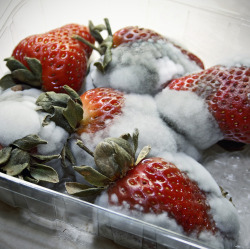 When life gives your strawberries, stick them in the corner till they go moldy.