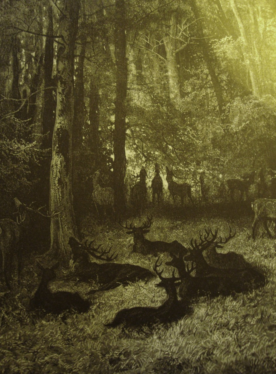 fullmoonpagan:   Gustave Doré (French, 1832-1883) Deer in a forest landscape