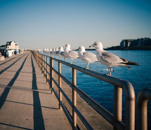 Get your gulls in a row (by Frank Scallo)