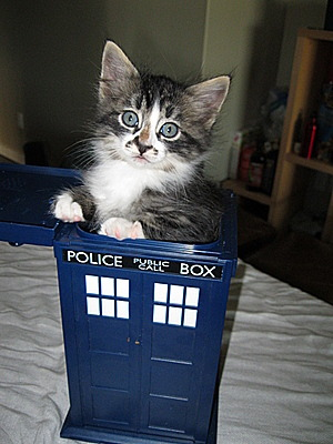 getoutoftherecat:  get out of there cat. you cannot be in that phone booth. you are not doctor who. you are not a time traveling british man you are a cat.  So far this summer I have spent my days waiting for David Tennant to fly up in his TARDIS and take me away from all of this.  I already have a kitty.