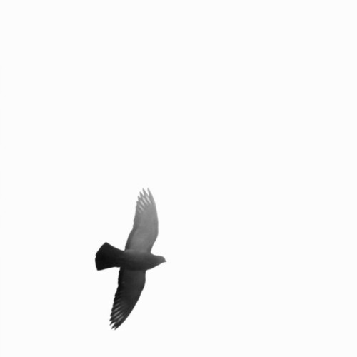 ALPHA • #dancristea #Konstruktivist #baw #bw #bird #minimal #minimalism  (Taken with Instagram at dancristea.bigcartel.com)