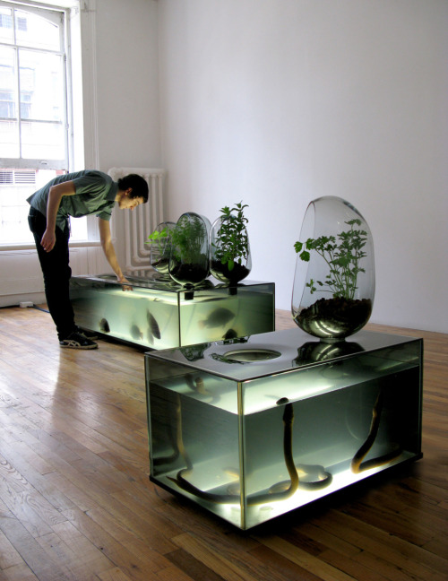 ordovicianfauna:  Aquarium/Pot Plants by Mathieu Lehanneur