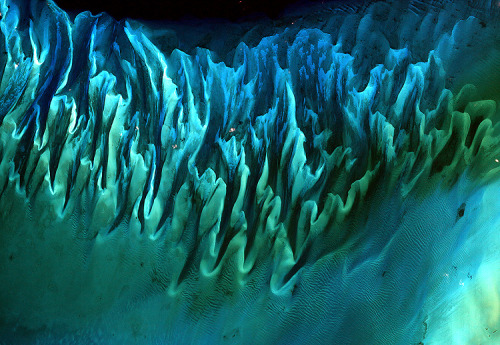 A satellite image of the sands and seaweed in the Bahamas—tides and ocean currents sculpted the beds into these patterns.