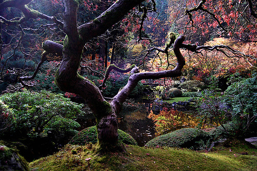 18mm:  Japanese Maple (by sue olson)   Gorgeous!