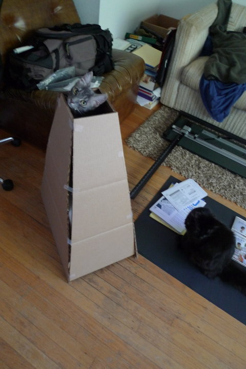 get out of there cat. you are not allowed to be in that box. just because it is a little more weirdly shaped box than regular does not mean you can sit in it. you cannot sit in regular boxes or irregular boxes you are a cat.