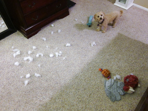Chowder's favorite pastime? Maiming innocent stuffed animals while I'm not around to stop him.