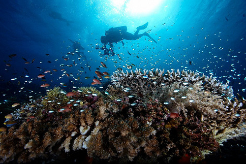 Underwater Moyo Island, West Nusa Tenggara, Indonesia. Reef & Marine Animals Vol 1 (by johnsoceanreefs)