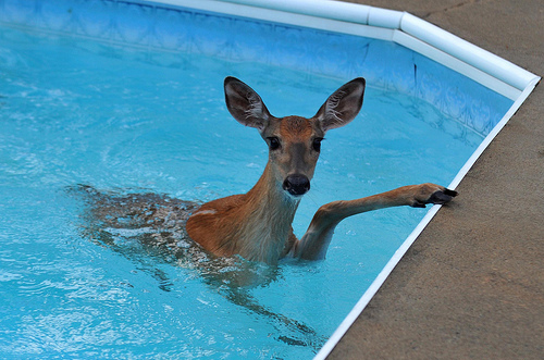 wreckl-ss:  misskellybby:  DEER GOD, WATER YOU DOING?!  I SEA WHAT YOU DID THERE