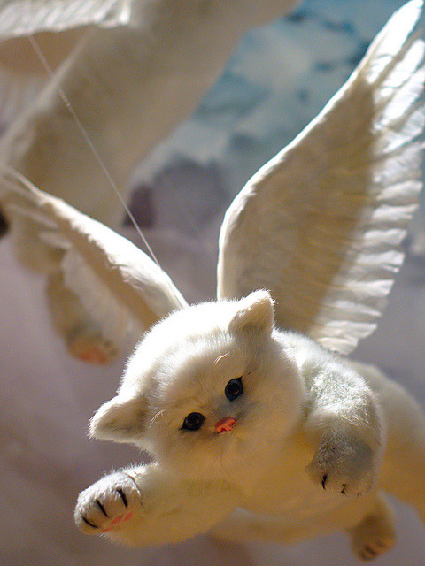 flying cat by Ian Muttoo on Flickr.