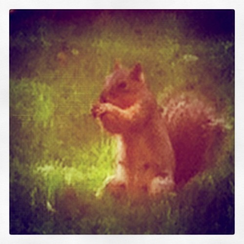 Yummy nuts! (Taken with instagram)
