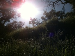 "I call this one ""The Sun."" Taken in Elysian Park with my phone."