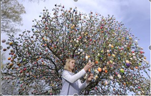 9,800 eggs and counting: Easter tree in Germany going strong after 46 years