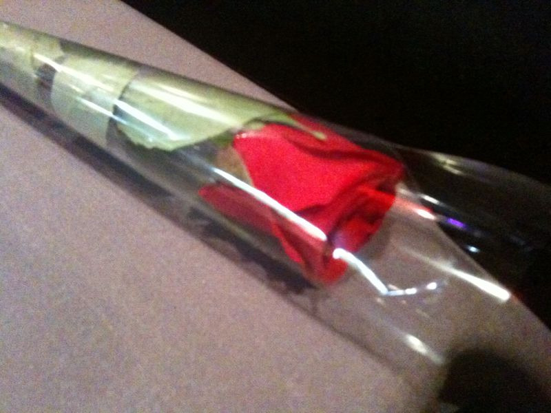 A rose just for you <3