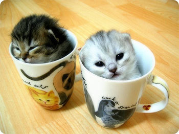 Kitties in a mug :) Submitted by yougivemebutterfliesx