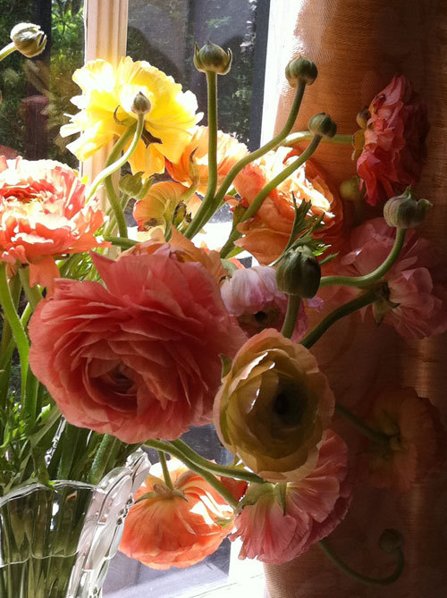 Happy Spring: We love ranunculus.