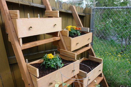 vegetable garden by mazaletel on Flickr. Have an old dresser? Now you have a garden! (Well, the drawers and some 2x4s.)