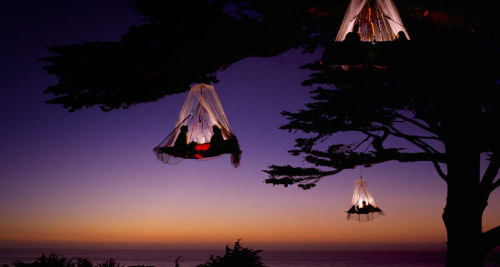iamblessed:  Tree Camping {photo via Louie Psihoyos} Adding this to my life bucket list……..