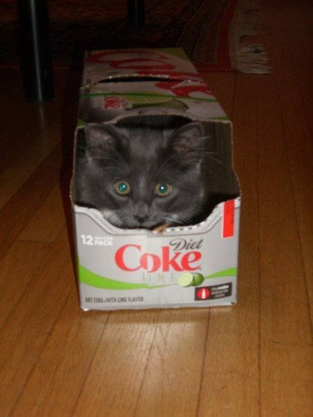 get out of there cat. you do not belong in my diet coke box. you don't have a hint of lime taste in you. you do not taste like citrus at all you are a cat.