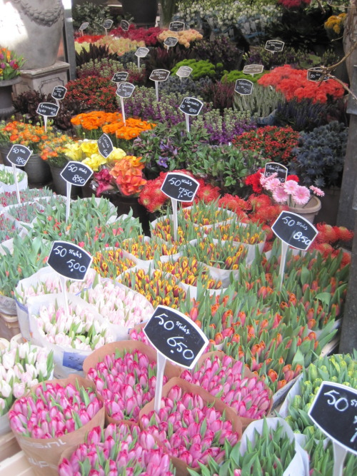 I want to go to a flower market so bad