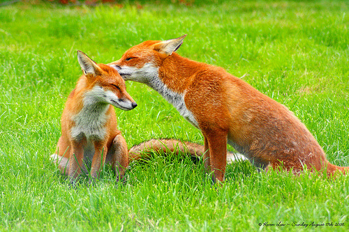 theanimalblog:  Softly Whispering I love you…:O)) (by law_keven)  love LOVE love
