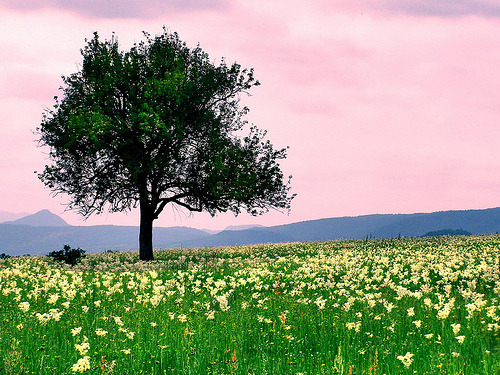 allthingseurope:  Spring in Romania (by Alin B.)   It'd suffice if this was in my dreams… but it's not. I must travel to see this masterpiece.