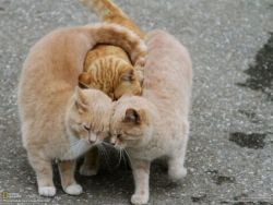 Awww, snuggling kitties. ♥