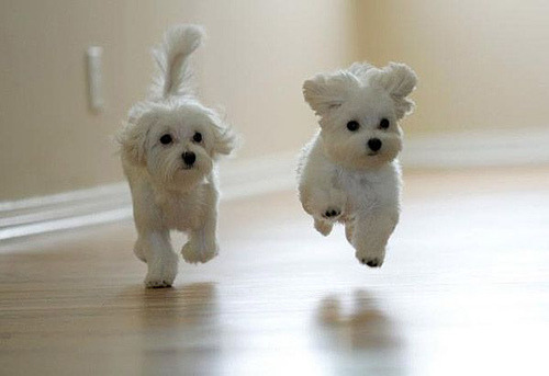 "wellthatsadorable:  This is the first Google image result for ""puppies running"". This is also the first result when for ""stampedes I would happily die in"""