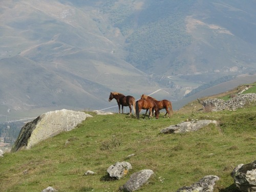 Horses on the Caucasian mountains