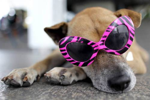 Coolest Dog!
