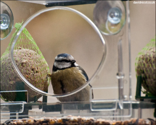 So we finally had a visitor to the bird feeder the other day!!