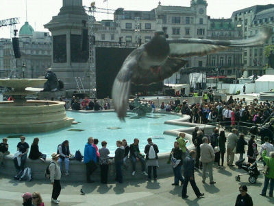 Love this shot! Bird's eye view of Trafalgar Sq as they set up #rw2011 screens. (via @peternbcnews)