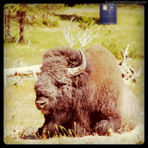 foundthetardis:  Yellowstone, Wyoming  We've been asking Where's The TARDIS? Being the internet, somebody answered: http://foundthetardis.tumblr.com/