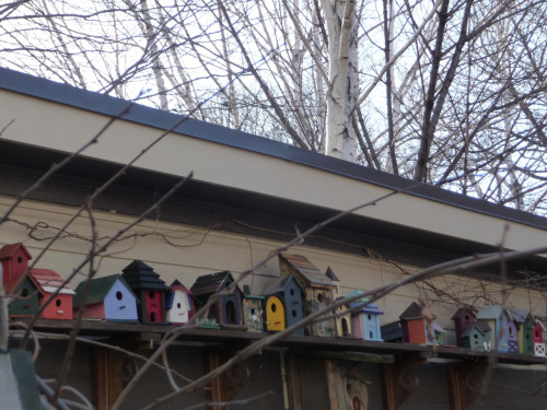 Bird houses in Libbytown. || Photo by kjmaine