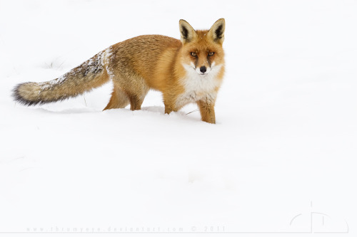 theanimalblog:  cold fire | by thrumyeye