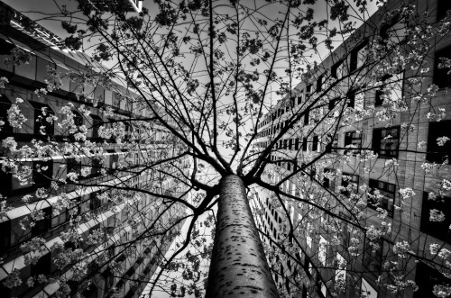 black-and-white:  tree of duo | by alierturk