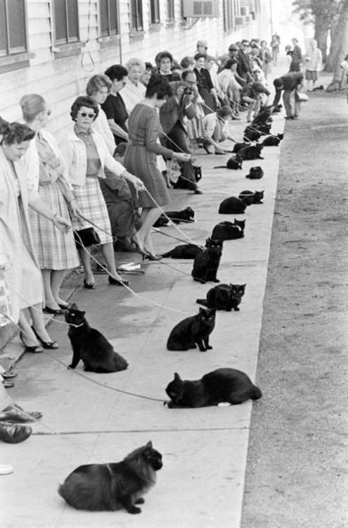 Get in line! theconstantbuzz:  Hollywood Auditions for Black Cat, 1961.
