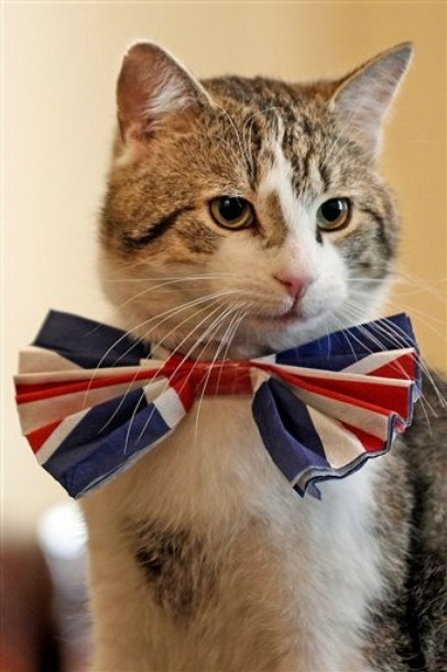 Anyway, so I'm going to marry Larry the Downing Street Cat in a vintage Alexander McQueen dress and I order you all get up at 3am to watch!! (Photo via DayLife)